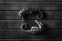 Seahorses. Royalty Free Stock Photography