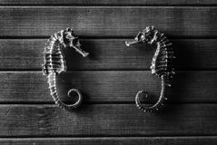 Seahorses. Stock Photos