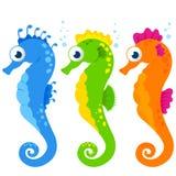 Seahorses Stock Image