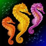 seahorsesvektor stock illustrationer