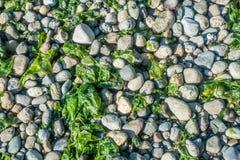 Seahurst海滩岩石 库存照片
