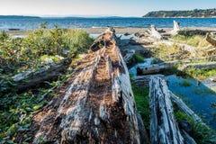 Seahurst Beach Log Royalty Free Stock Image