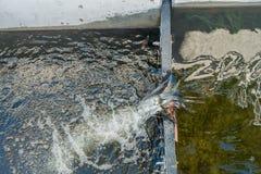 Seahurst Beach Salmon Ladder 3. Closeup of the Salmon Ladder at Seahurst Beach in Burien, Washington stock image