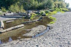 Seahurst Beach Stream. A stream flows along Seahurst Brach Park in Burien, Washington stock image