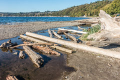 Seahurst Dirftwood Logs. Driftwood logs lay on the ground at Seahurst Beach in Burien, Washington stock images