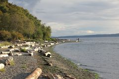 Seahurst Park Beach Driftwood. Driftwood strewn along the beach in Seahurst Park. Landscape view of Puget Sound royalty free stock images