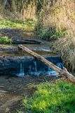 Seahurst Park Stream 3. A view of a stream at Seahurst Park in Burien, Washington stock photo