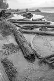 Seahurst Shoreline. Driftwood logs litter the shoreline at Seahurst Park in Burien, Washington stock images