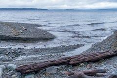 Seahurst Shoreline 3. Driftwood logs litter the shoreline at Seahurst Park in Burien, Washington royalty free stock images