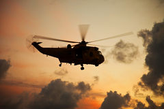 Seaking Royalty Free Stock Images