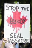 Seal activist. Stock Images