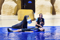 Seal at the Aquarium with the  trainer Royalty Free Stock Photos