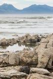 Seal basking on rocks at Kaikoura beach Royalty Free Stock Images