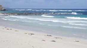 Seal Bay, Kangaroo Island, South Australia Royalty Free Stock Images