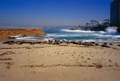 Seal Beach in La Jolla Royalty Free Stock Photo