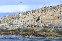 Seal and bird in Beagle Channel, Ushuaia, Argentina Stock Photos