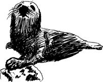 Seal. Black and White Seal on a Rock, it is hand drawn Stock Photo