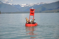Seal on bouy. Seal on a buoy with mountain vista in background stock photos