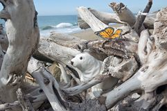 Seal and butterfly. Seal butterfly and driftwood royalty free stock images