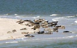 Free Seal Close Up Stock Image - 22932971