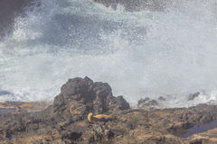 Seal on Coast Stock Photos