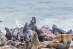 The seal colony at Cape Cross, on the atlantic coast of Namibia, Africa. View on the shoreline and the rough waving ocean.  stock image
