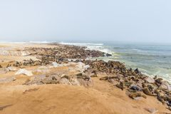 The seal colony at Cape Cross, on the atlantic coastline of Namibia, Africa. Expansive view on the beach, the rough ocean and the. Foggy sky Stock Images