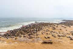 The seal colony at Cape Cross, on the atlantic coastline of Namibia, Africa. Expansive view on the beach, the rough ocean and the. Foggy sky Stock Image