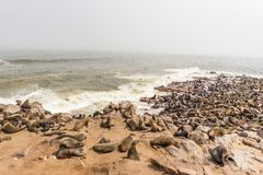 The seal colony at Cape Cross, on the atlantic coastline of Namibia, Africa. Expansive view on the beach, the rough ocean and the. Foggy sky Royalty Free Stock Image