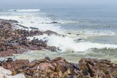 The seal colony at Cape Cross, on the atlantic coastline of Namibia, Africa. Expansive view on the beach, the rough ocean and the. Foggy sky Stock Photo