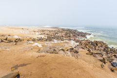 The seal colony at Cape Cross, on the atlantic coastline of Namibia, Africa. Expansive view on the beach, the rough ocean and the. Foggy sky Royalty Free Stock Images