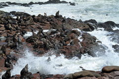 Seal colony at Cape Cross in Namibia. A Seal colony at Cape Cross in Namibia royalty free stock photo