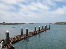Seal colony in harbor Stock Photos
