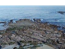 Seal Colony, New Zealand Stock Photos