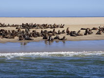 Seal colony. This seal colony   was  photographed   from  a  boat  doing  trips  to  the   seal  colony Stock Photos