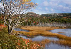 Seal Cove Pond Royalty Free Stock Photos