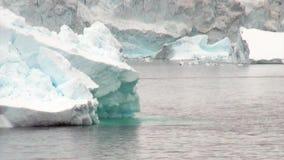 Seal dive near ice floe in ocean of Antarctica. stock video