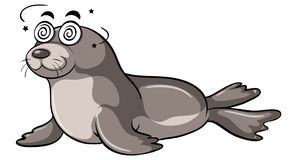 Seal with dizzy face Royalty Free Stock Photos