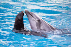 Seal and dolphin Royalty Free Stock Images