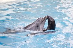 Seal and dolphin Royalty Free Stock Photos