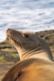 Seal enjoying sunny morning Stock Photography