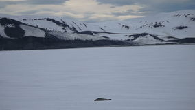 Seal on fast ice, Deception Bay, Antarctica stock video footage