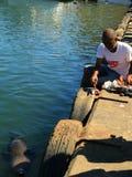 Seal Feeding Stock Photos