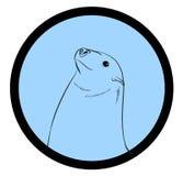 Seal Fish Face Closeup Vector Stock Photography