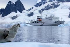 Seal in front of ship, boat, Antarctic Peninsula. Antarctica royalty free stock images