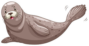 Seal with gray skin Stock Images