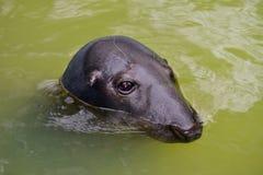 Seal head Stock Photo