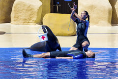 Seal helping  fainted person at the Aquarium in Spain Royalty Free Stock Photo