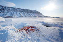 Seal Hunt. Bloody remains of a seal after it had been captured and eaten by a predator Royalty Free Stock Photo