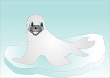 Seal on ice Stock Photo
